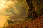 Creepy landscape painting showing remains of old forest on misty autumn day