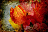 Vintage tulips with water droplets