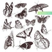 Farfalla set: collezione entomologica di altamente dettagliata farfalle disegnate a mano