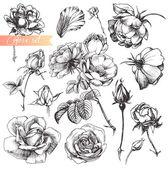 Set di fiori: altamente dettagliate Rose disegnata a mano