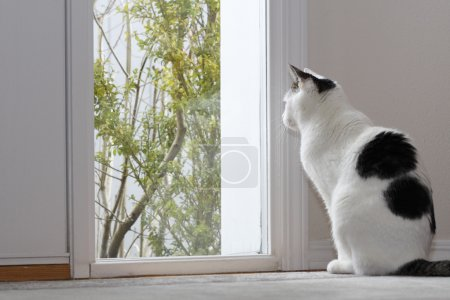 cat, looking, out, a, window - B8921314