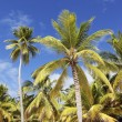 thumbnail of Palm trees