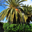 thumbnail of Big Green Palm in Ibiza beach, Balearic Island, Spain
