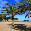 thumbnail of Beautiful small bay in Ibiza, Baleares Island, Spain.