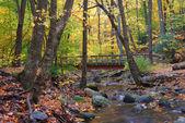 Podzimní dřevěný most v lese žlutá javor