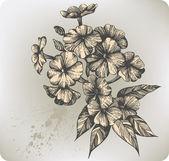 Flower blooming phlox hand-drawing Vector illustration