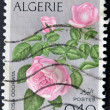 thumbnail of ALGERIA CIRCA 1973: stamp printed in Algeria shows Rosa Odor