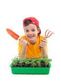Giovane ragazzo imparando a coltivare cibo - con piantine di pomodoro e utensili giardinaggio