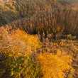 thumbnail of Autumn Landscape