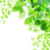 čerstvé zelené listy pozadí - vektorové ilustrace