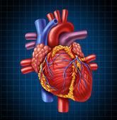Anatomia del cuore umano da un corpo sano su uno sfondo blu e nero grafico come un simbolo di assistenza sanitaria medico di un organo interno cardiovascolare