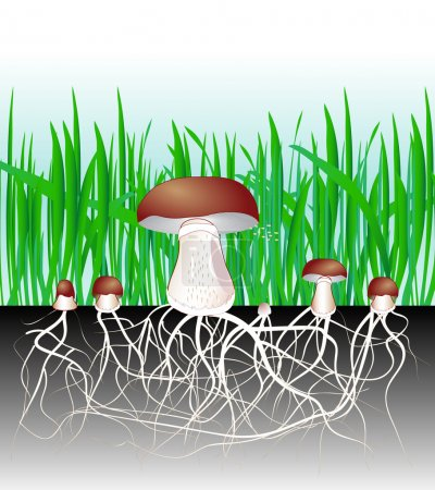 Постер, плакат: Mushrooms and vegetation Reproduction fungus Mycelium and spore, холст на подрамнике