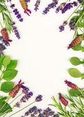 Gyógyító fűszernövények