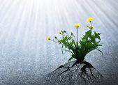 Hell Hoffnung auf Leben