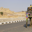 thumbnail of Elephant on the Road