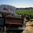 thumbnail of Vineyard with old truck