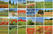 Landscape with red poppies collage