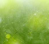 Natural background with a spider web and drops Eps 10