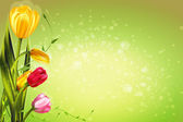 Colorful tulips spring flowers on a light background green for parties of 8 march and easter
