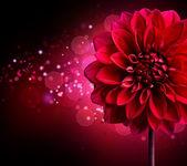 Dahlia podzimní květina design.over černý