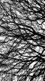 Letitý strom v černé a bílé