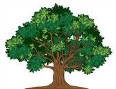 Vector illustration of old green oak tree