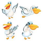 Illustraiton of pelicans on white