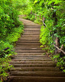 Stairway to forest