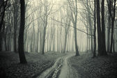 Path through a forest with black trees and mist
