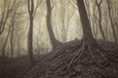Trees with visible roots in a misty forest