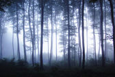 Sunrise in a forest with fog in a cold morning