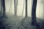 Dark forest with fog between trees