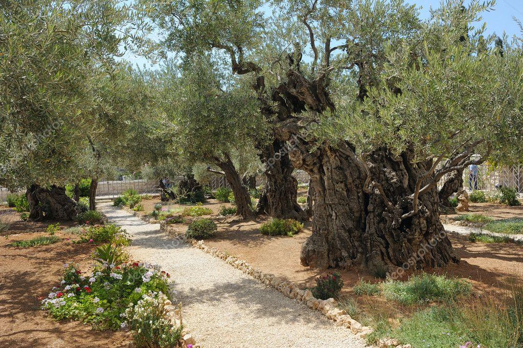 Áˆ Jesus In Garden Of Gethsemane Stock Pictures Royalty Free Garden Of Gethsemane Images Download On Depositphotos