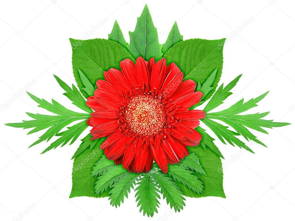 Fleur Rouge Avec Feuille Verte Photographie Boroda C 10370051