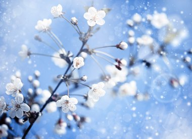 Apple tree with flowers under blue skies.