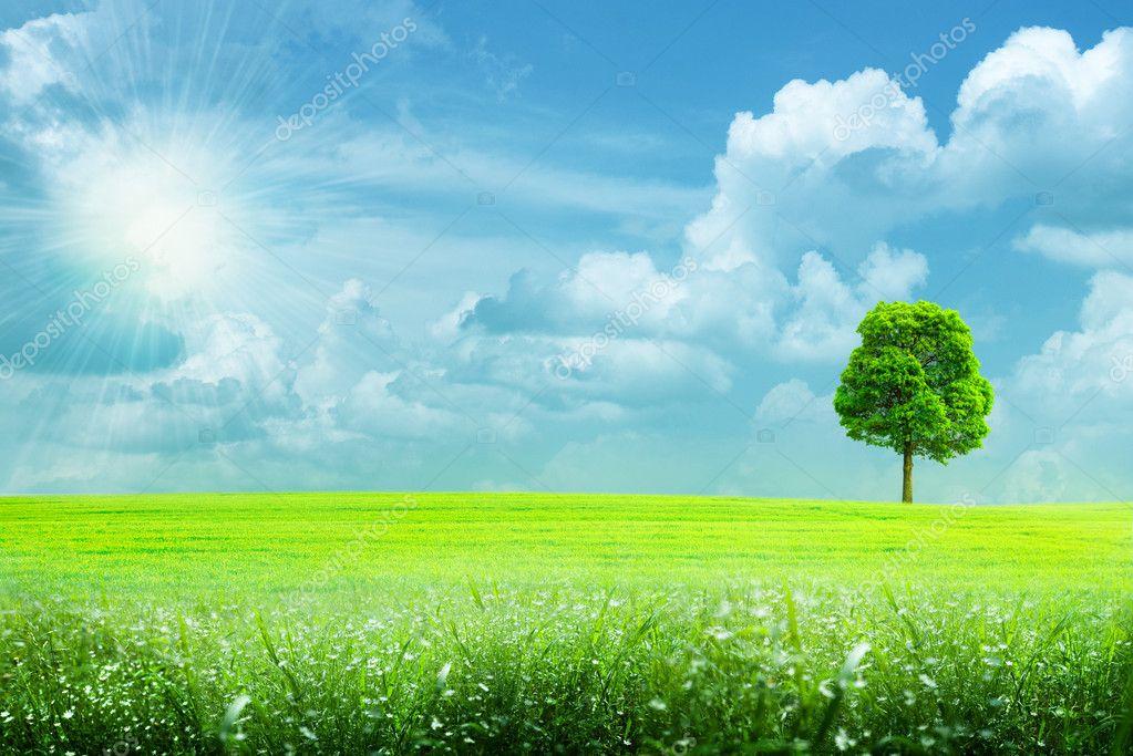 Abstract summer rural landscape