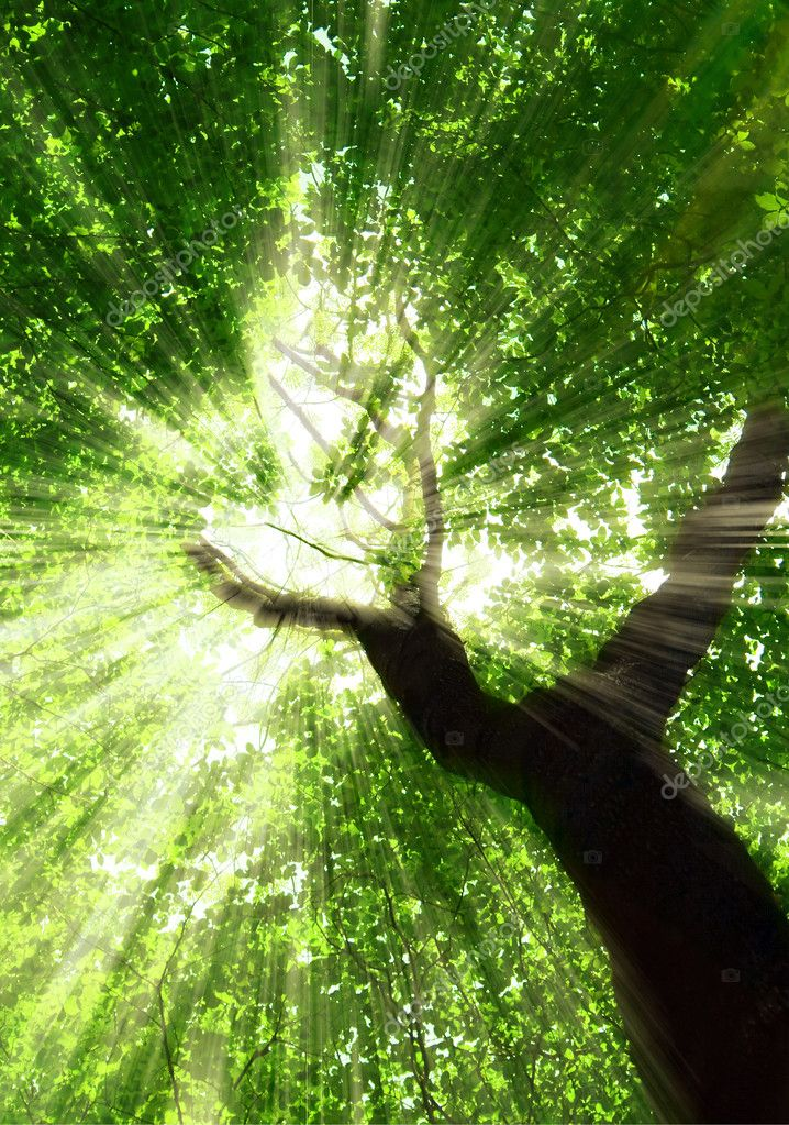 Фотообои Forest trees. nature green wood sunlight backgrounds.