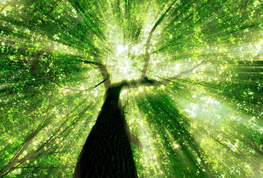 Фотообои Лесные деревья. природа зеленый фон древесины солнечного света.