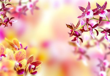 Blooming background