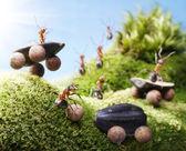 Fotografie Autounfall bei Ameisenrennen, Ameisengeschichten