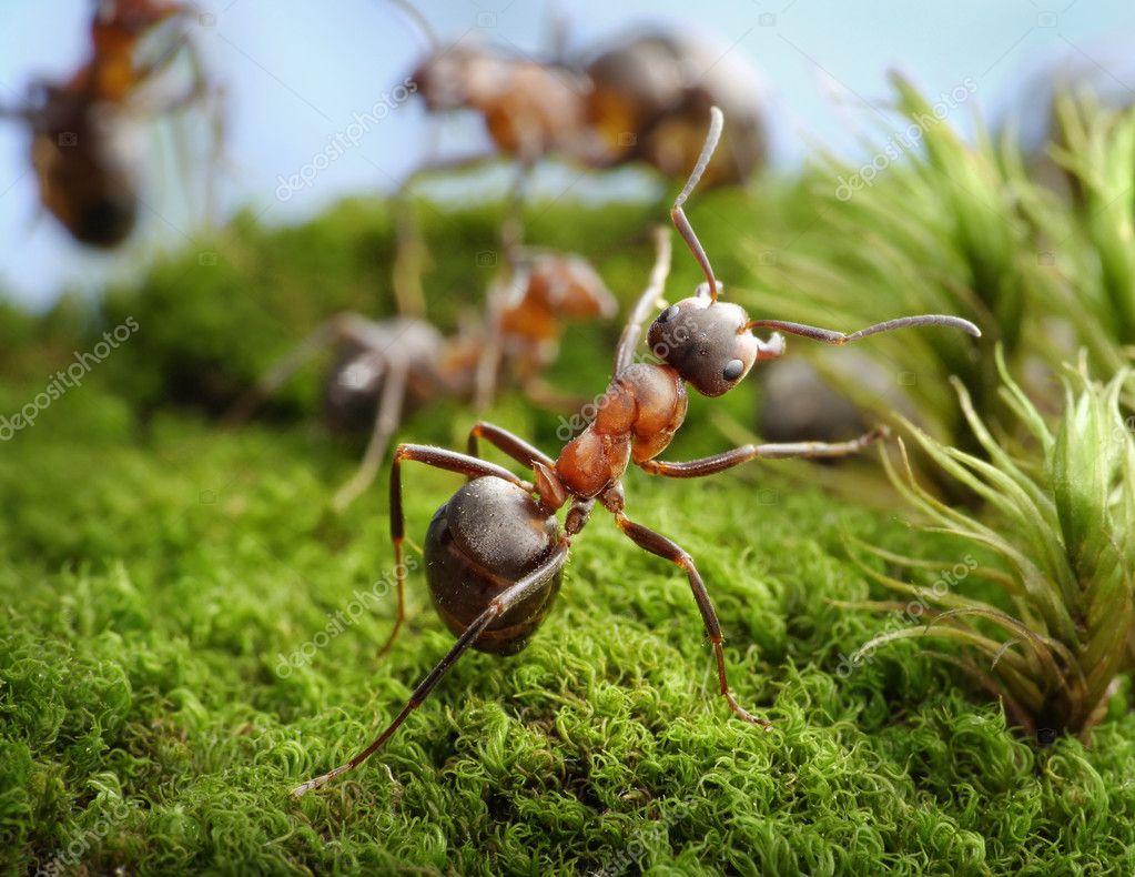 Stop! Deed of Hero, ant tales