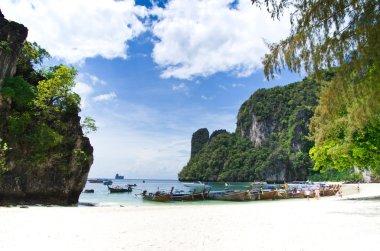 Landscape of tropical