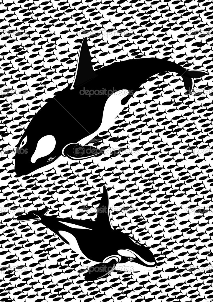 Killer whales in the sea