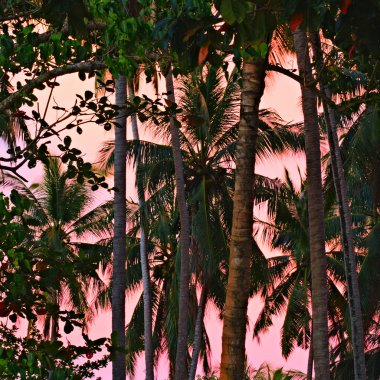 Jungle at Sunset
