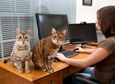 Woman and cats at computer desk
