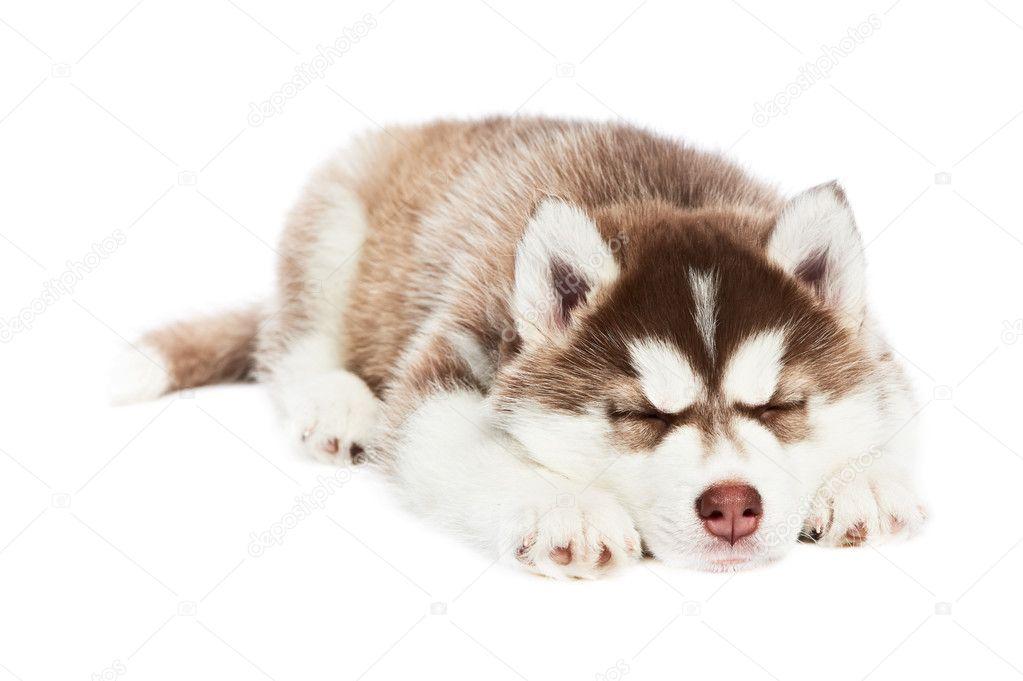 картинки спящая собака