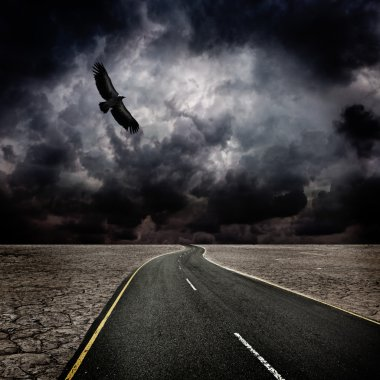 Storm, bird, road in desert