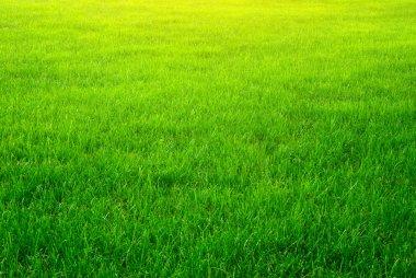 Green grass background texture. Element of design. stock vector