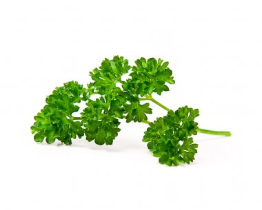 Fresh leaf of parsley