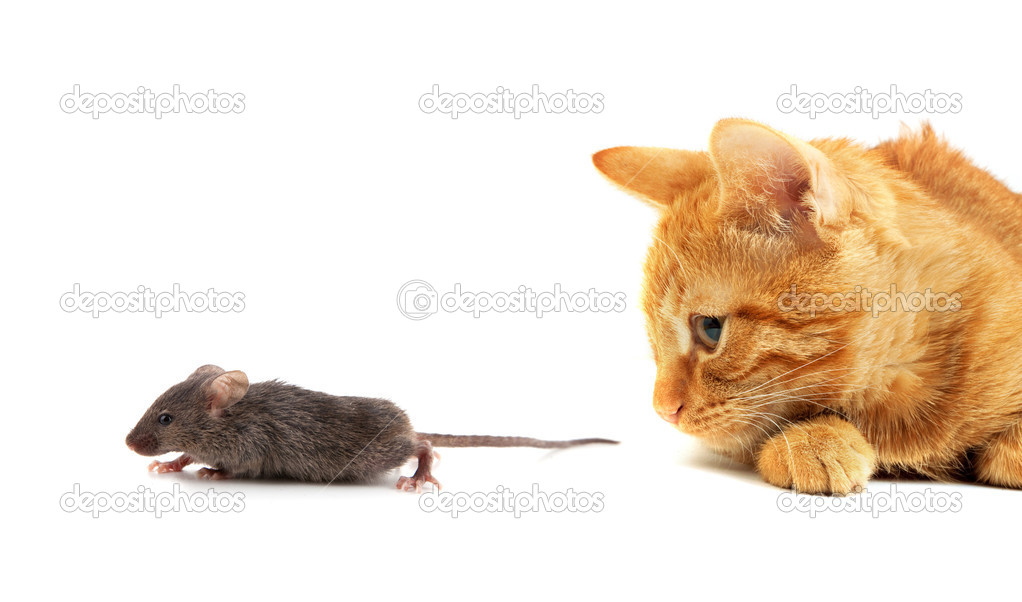 Mouse and cat